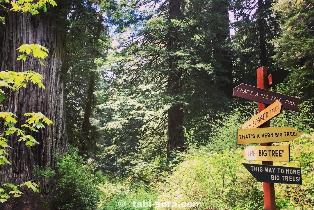 レッドウッド国立公園ビッグツリー
