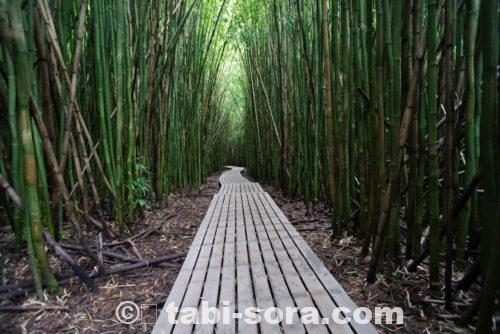 ピピワイ・トレイルの竹林