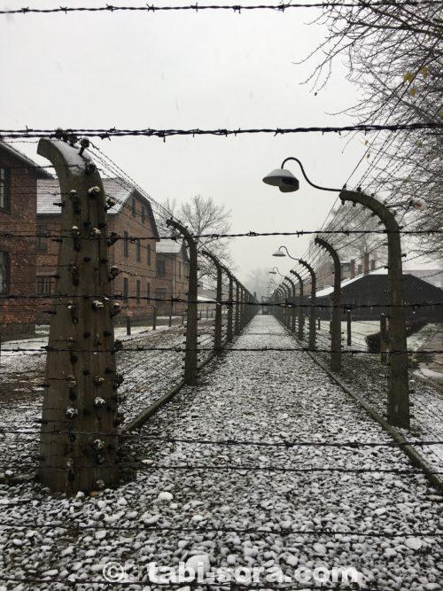 アウシュヴィッツの鉄条網