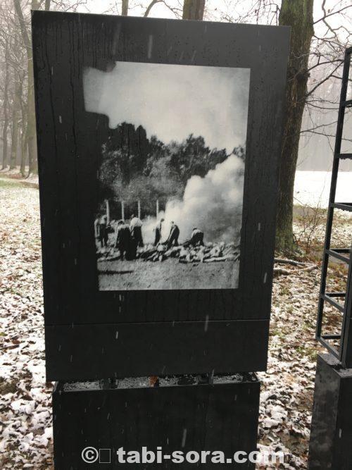 焼却状況の写真