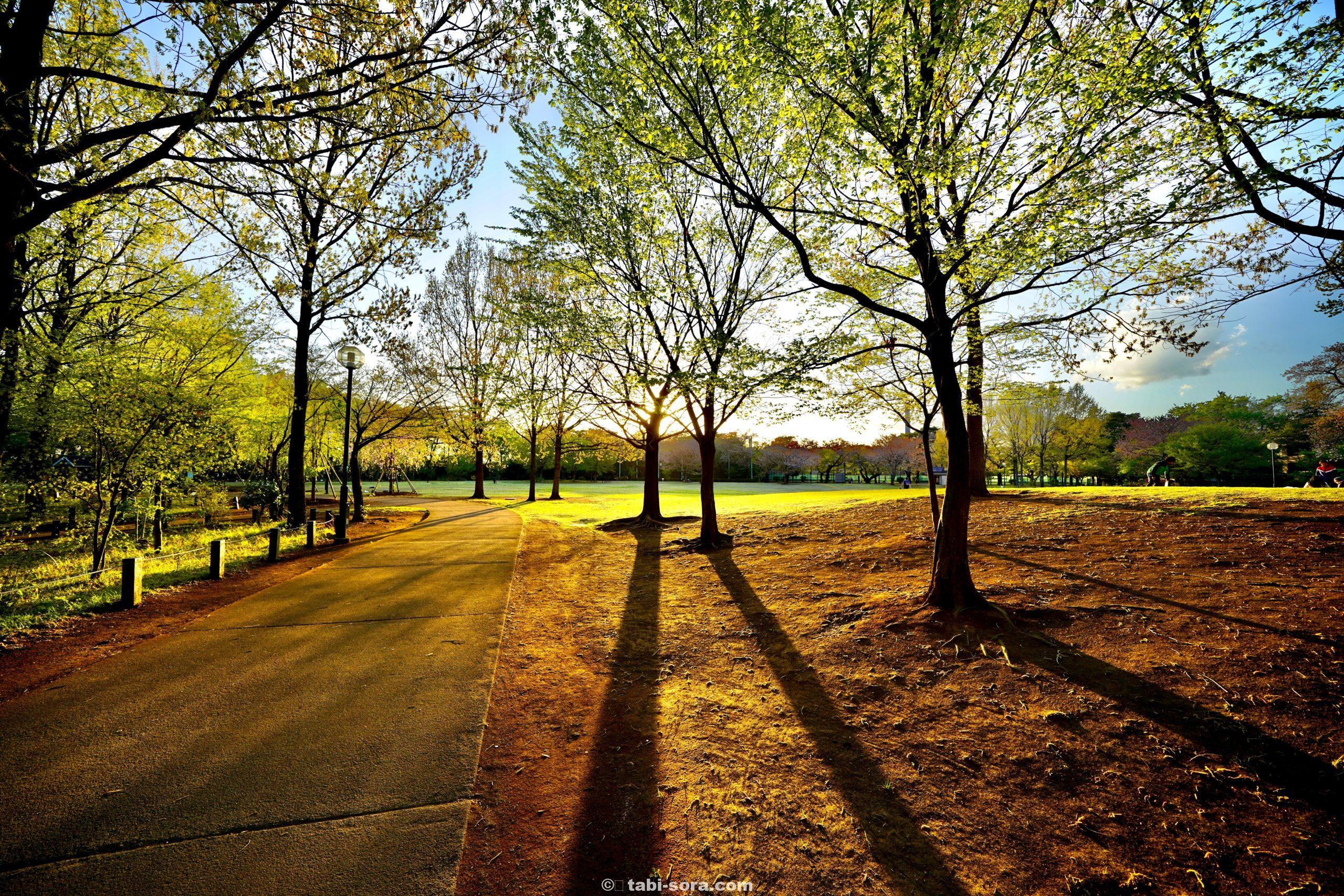 光と影の公園